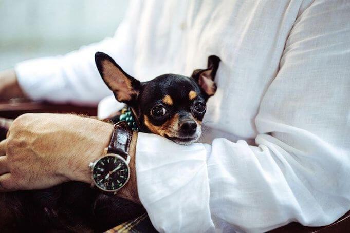 work-environment-pets