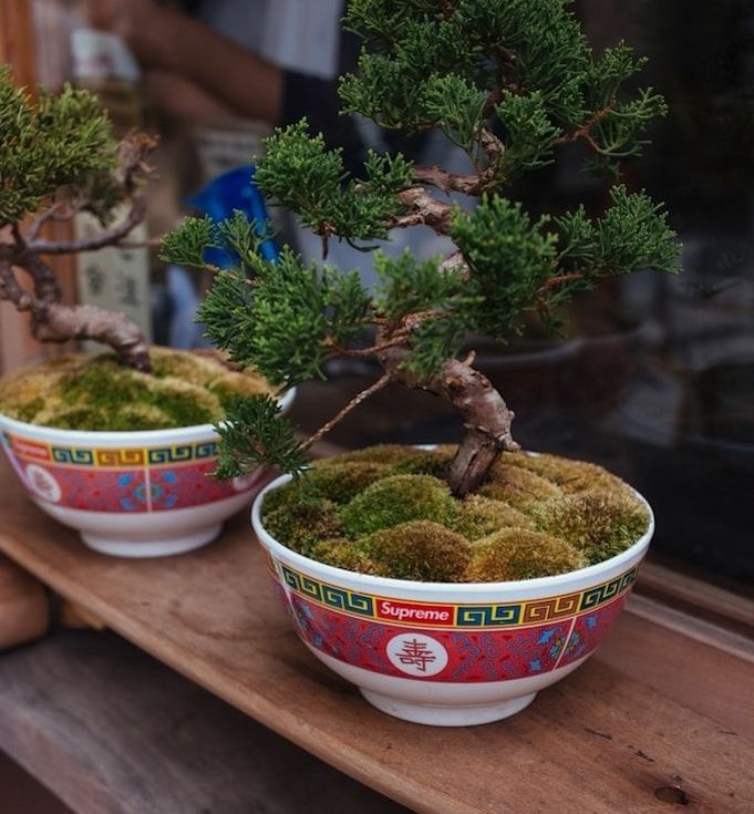 christmas-gifts-for-employees-bonsai