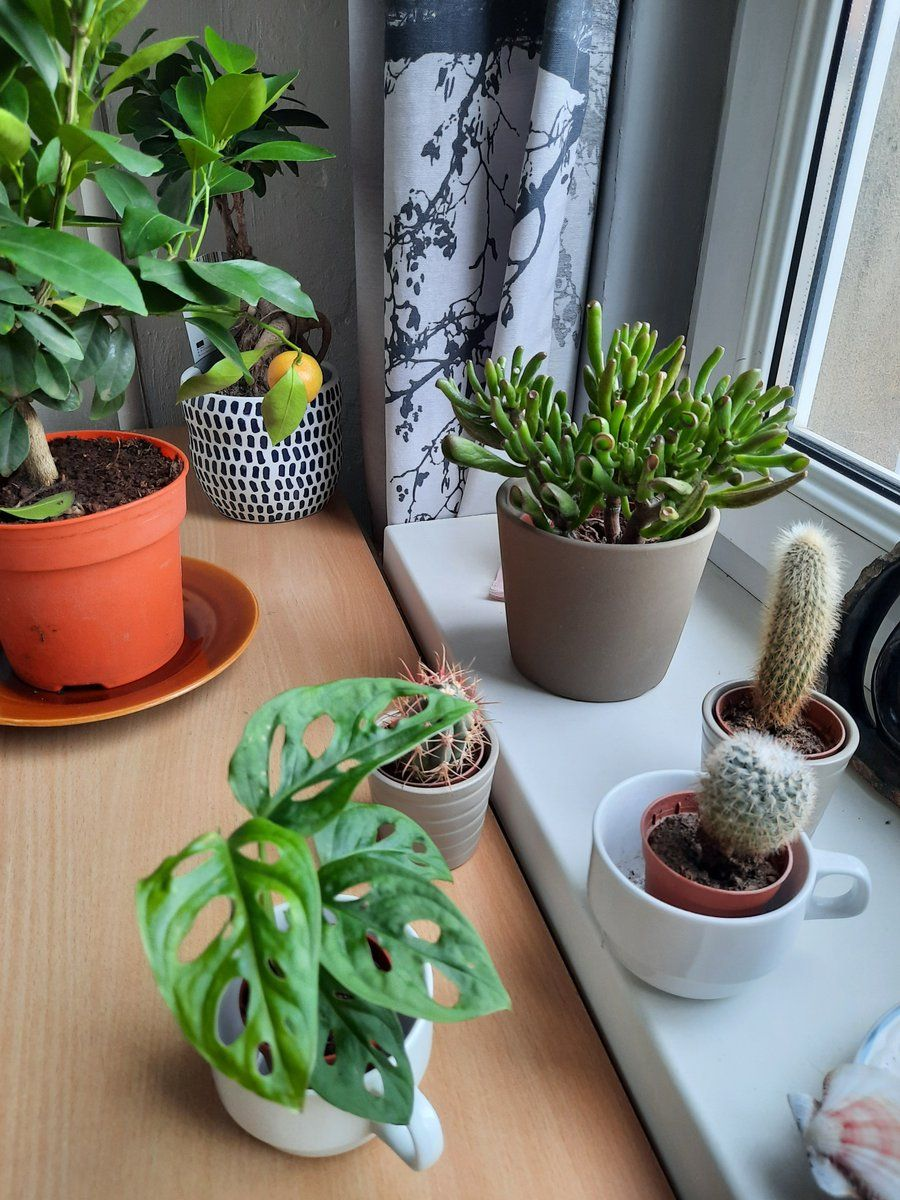 plants-at-home office work-space