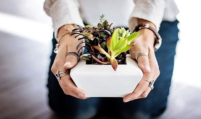 succulents as retirement gifts